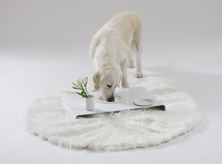 Room service. Design: Marco Morosini Porcelain bowls for dogs.