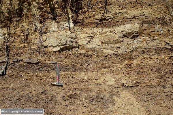 Łupki menilitowe i piaskowce kliwskie (oligocen) - Przysietnica, woj. podkarpackie, POLSKA; Photo Copyright © Mateusz Wrona