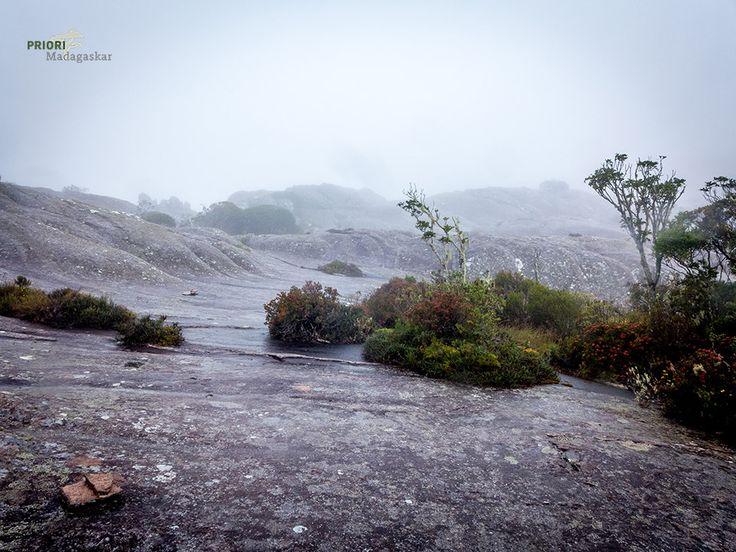 Andringitra Nationalpark Madagaskar. Mondebene mit endemischen Pflanzen bei Nebel.