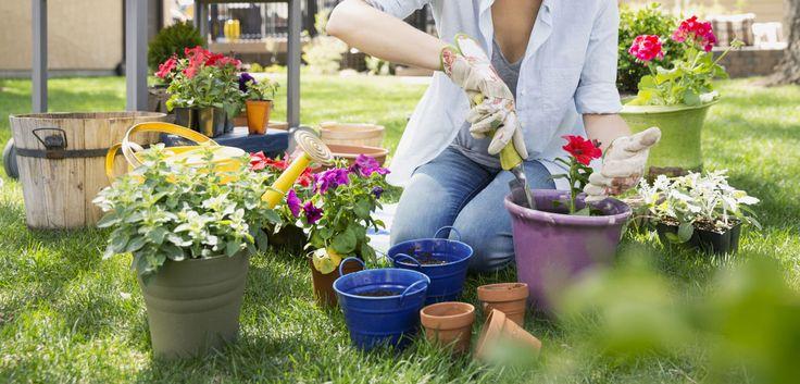 Le 8 migliori app di giardinaggio per sviluppare il pollice verde e coltivare piante a casa tua -cosmopolitan.it