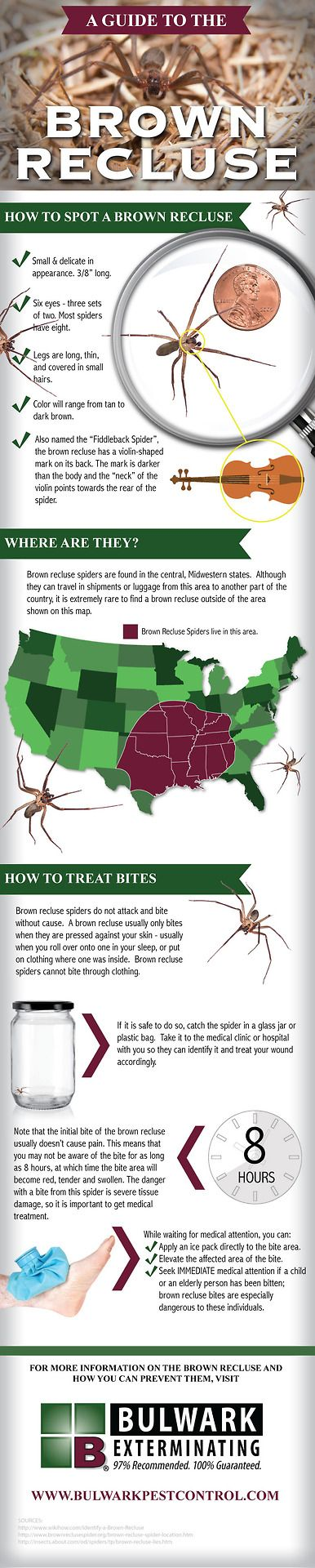 "A Guide to the Brown Recluse Spider - they also ""travel"" and have been seen as far north as N.H."