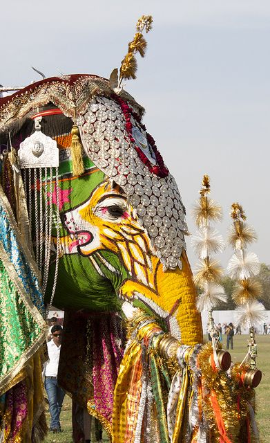 ELEFANTES ADORNADOS - Elephant Festival, Jaipur, India