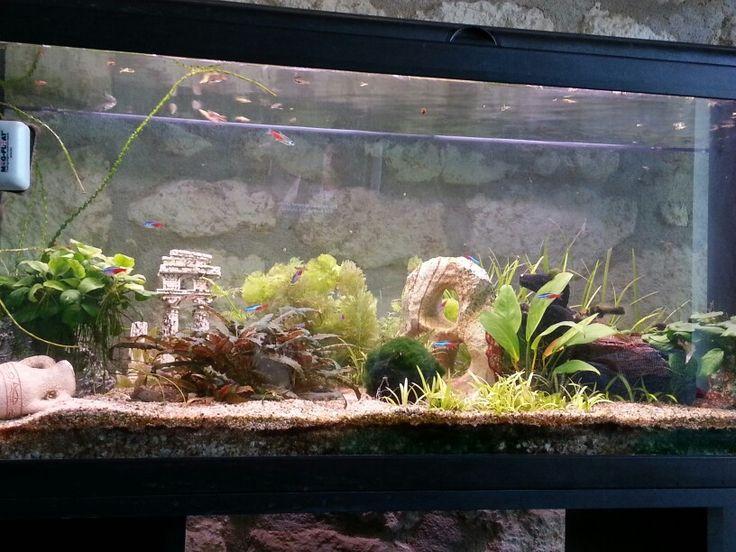 Principal aquarium 200l