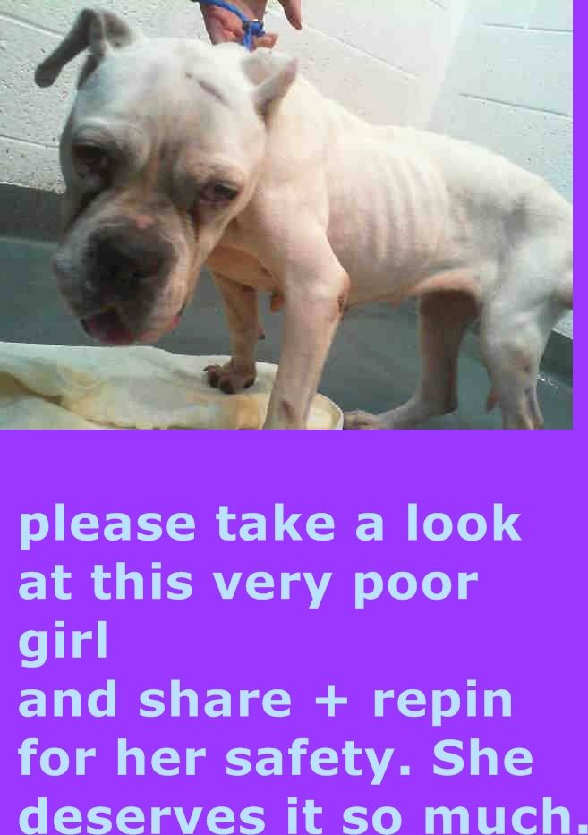TERRA (A1237219)I am a female white and black American Bulldog. The shelter staff think I am about 10 years old. I was found as a stray and I may be available for adoption on 02/15/2015. — hier: Miami Dade County Animal Services. https://www.facebook.com/urgentdogsofmiami/photos/pb.191859757515102.-2207520000.1423530199./925788400788897/?type=3&theater
