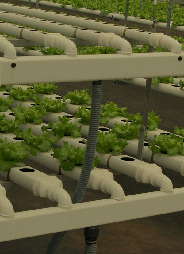 H2HYBRID de H2HYDROPONICS, el sistema de cultivo y riego hidropónico sobre agua que aumenta las cosechas y reduce los costes de producción.