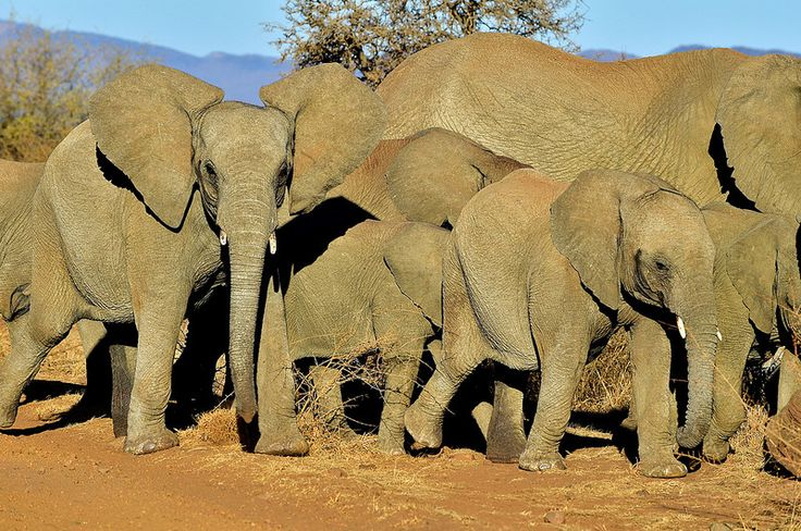 Madikwe Game Reserve, North West, South Africa | by South African Tourism