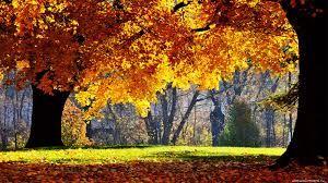 Imagini pentru poze frumoase
