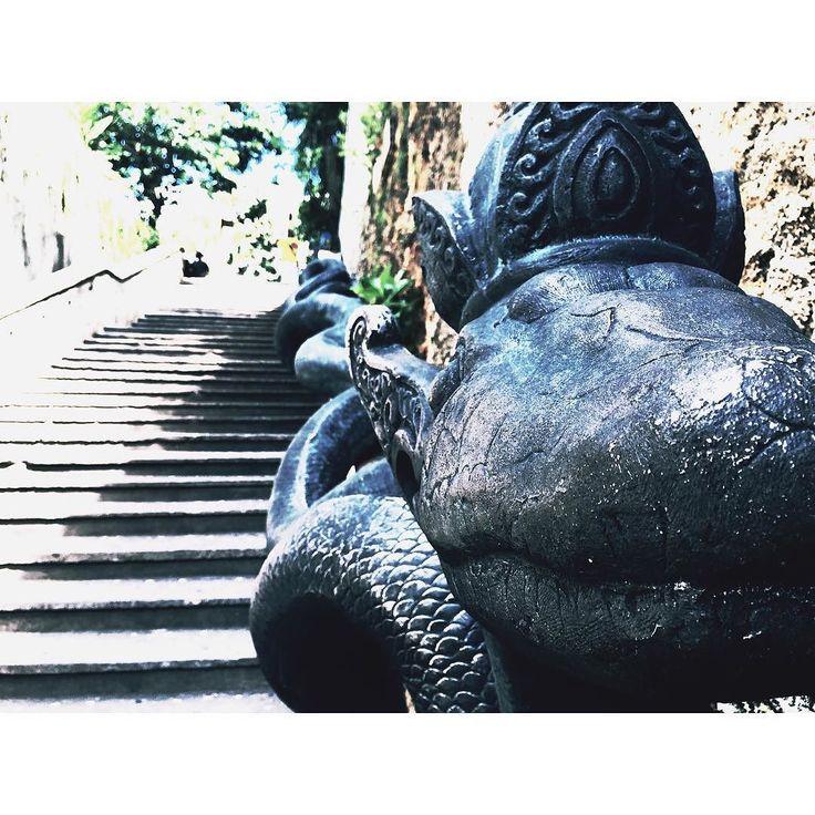 King snake #bali #holiday #1week #holidaymood #prayforasafejourney #iphonesia #i…