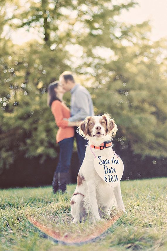 Let them star in your Save the Dates. | 29 Perfectly Adorable Ways To Include Your Pet In Your Wedding: