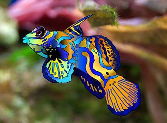 1000+ images about Tropical fish on Pinterest | Popular ...