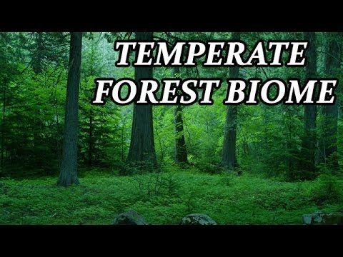 temperate forest biome essay Temperate deciduous forests can be found in the eastern part of the united  states and  the temperate deciduous forest is a biome that is always changing   animals that live in the temperate deciduous forest must be able to adapt to the .