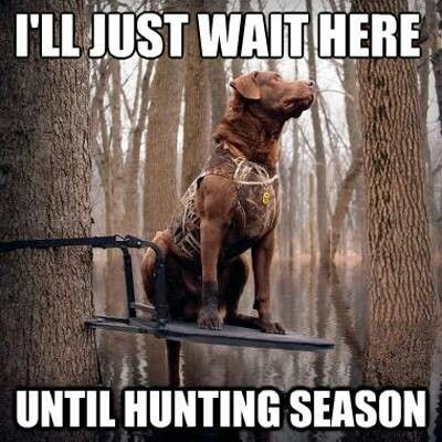 I'll just wait here until hunting season - we're right there with you, bud! Save us a seat! #huntingdog #waterfowl #treestand