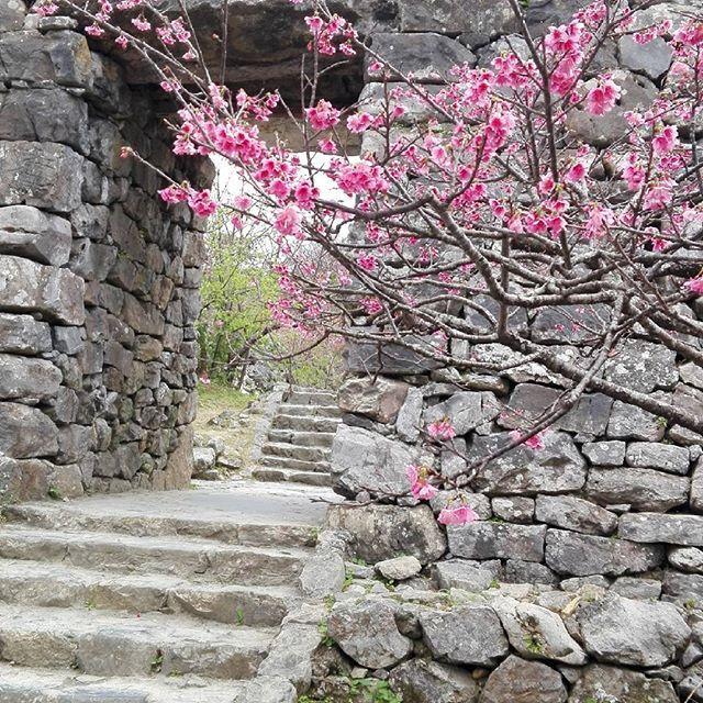 【felice.selena18】さんのInstagramをピンしています。 《今帰仁城の桜がきれいでした♡城跡ですが、様々な歴史を刻んでいます。そこに存在する、山、海、城跡、土地、木々はその場で沢山の歴史を見てきたんですね♡そう思うと、人は形がなくなり生まれ変わるけど、その場に存在するモノたちも、それぞれ新しいエネルギーを受け生まれ変わっているのかな?歴史って面白い 今帰仁城の御嶽の前でガイドさんの説明を受けてたら、頭が痛くなった…笑 …けど、今は治りましたぁ~仕事終わりのささやかな一時でした✨ 【子育て*幼児教育専門占い】ご相談は、DM又はgmail よりお受けします。恋愛や仕事のお悩みもokです‼ felice.selena18@gmail.com  #エンジェル#光#沖縄 #琉球#メール鑑定#カードリーディング#霊感#霊視#透視#子育て悩み#子育て相談#育児相談#仕事#職場悩み#幼稚園#保育士#メール占い#エンジェルカード #タロットカード#歴史#今帰仁城#自然#森》