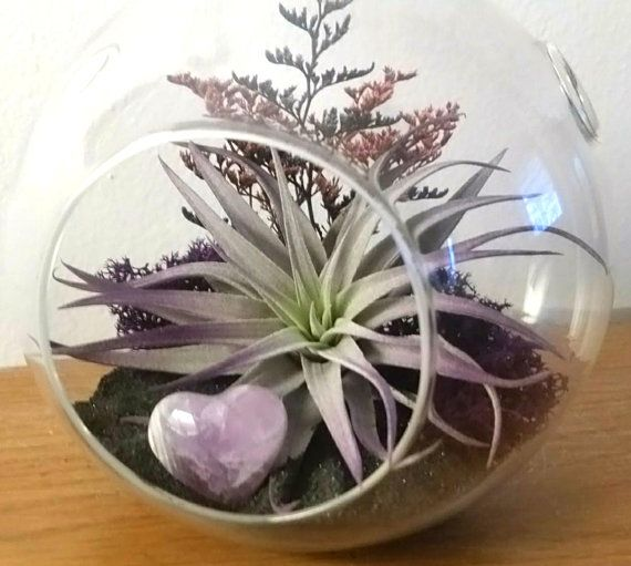 Amethyst Heart Large 6 5 Air Plant Terrarium Kit Hanging Or