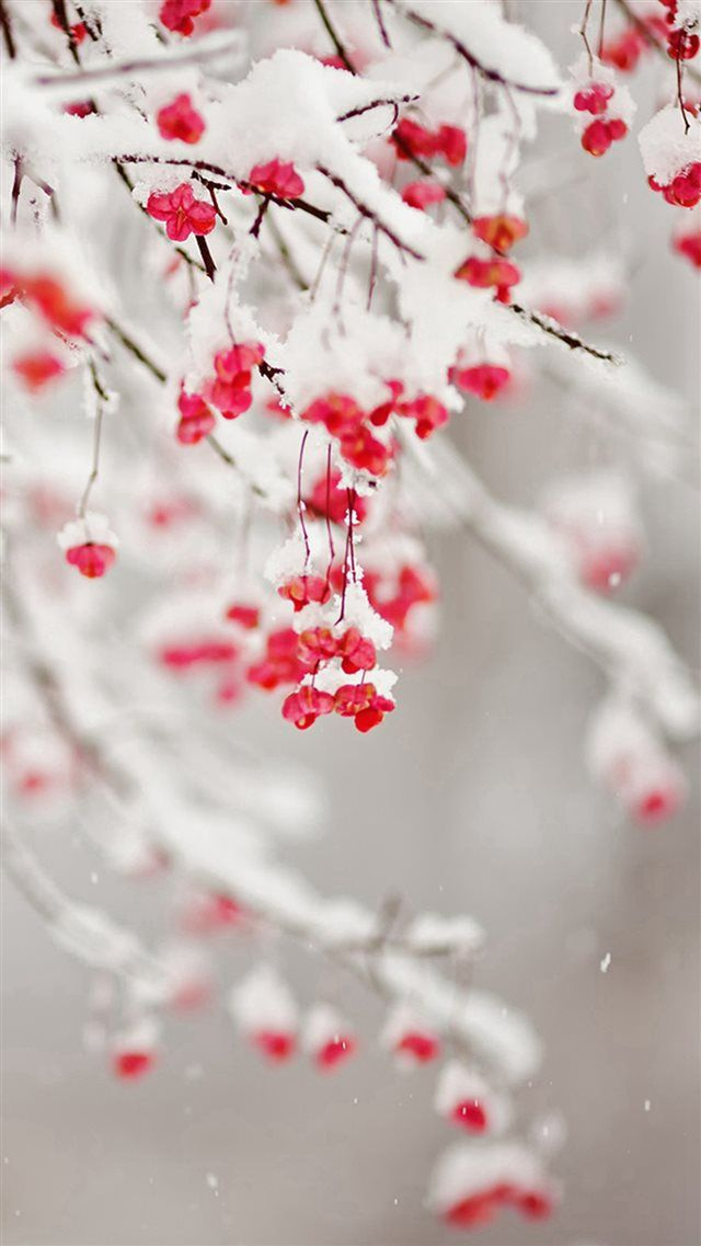 Winter Snowy Pure Icy Fruit Branch Iphone 8 Wallpapers Iphone