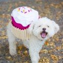 Just added my InLinkz link here: http://diyshowoff.com/2014/10/15/diy-lightning-bug-dog-costume/?crlt.pid=camp.aUjbbdXDINew