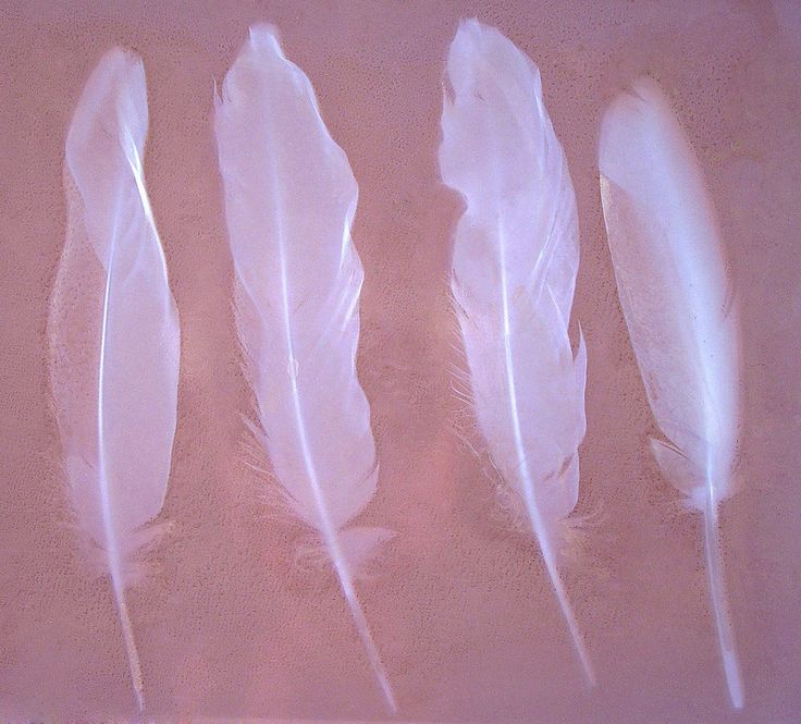 Lumen Print 1538 Goose Feathers by John Fobes: copyrighted all rights reserved