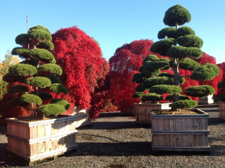 from our visit to Iseli Nursery, Growers in Oregon