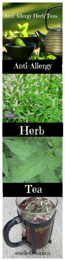 Enjoy Anti-Allergy Herb Teas ~ new habits to start now. Powerful herb allies. Beat those allergy symptoms!