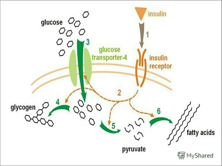 -Акарбоза-(Глюкобай) Действие:  Акарбо́за — гипогликемическое лекарственное средство, ингибитор альфа-глюкозидазы, тормозящий переваривание и всасывание углеводов в тонкой кишке и, как следствие, сокращающий рост концентрации глюкозы в крови после употребления углеводсодержащей пищи. Использование: Использование: управление гликемическим индексом (контроль) путём постепенного снижения глюкозы в крови у животных, больных диабетом, но плохо переносящих инсулин и диету. Безопасность  и…