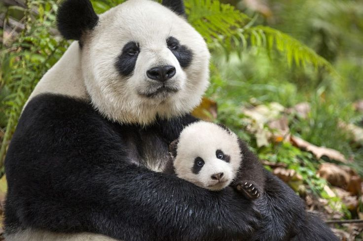 Born In China  DisneyNature  Disney Movies Coming Out This Spring in Canada: You Don't Want to Miss Them