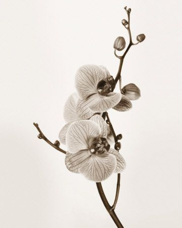 orchid...even more beautiful without color.