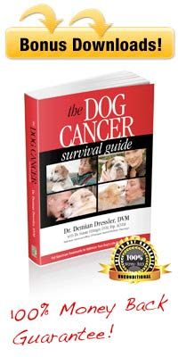 Dog Cancer Survival Guide Tripawds Book Review