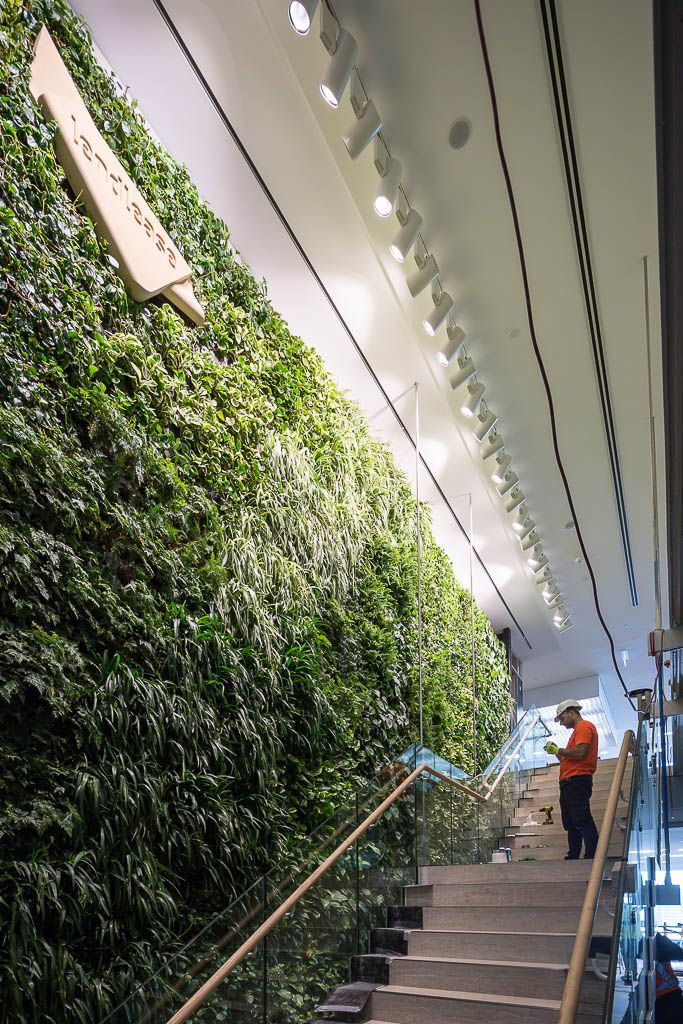 A six-metre high, breathing green wall will provide Lendlease workers with fresh, clean air when they move into their new global headquarters at Barangaroo this year.