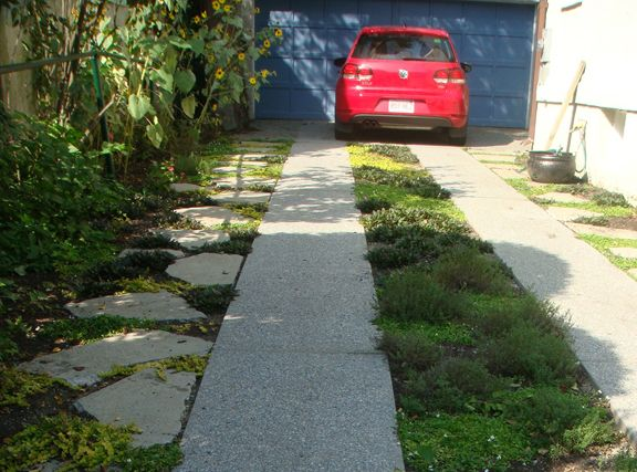 """Recycling concrete  Tips:  """"We opted to fill the gaps with some cuttings of woolly thyme, which should spread aggressively and be durable underfoot (and we won't need to mow)."""""""