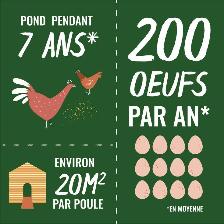 20 best Un poulailler dans mon jardin images on Pinterest Chicken - fresh apprendre blueprint ark