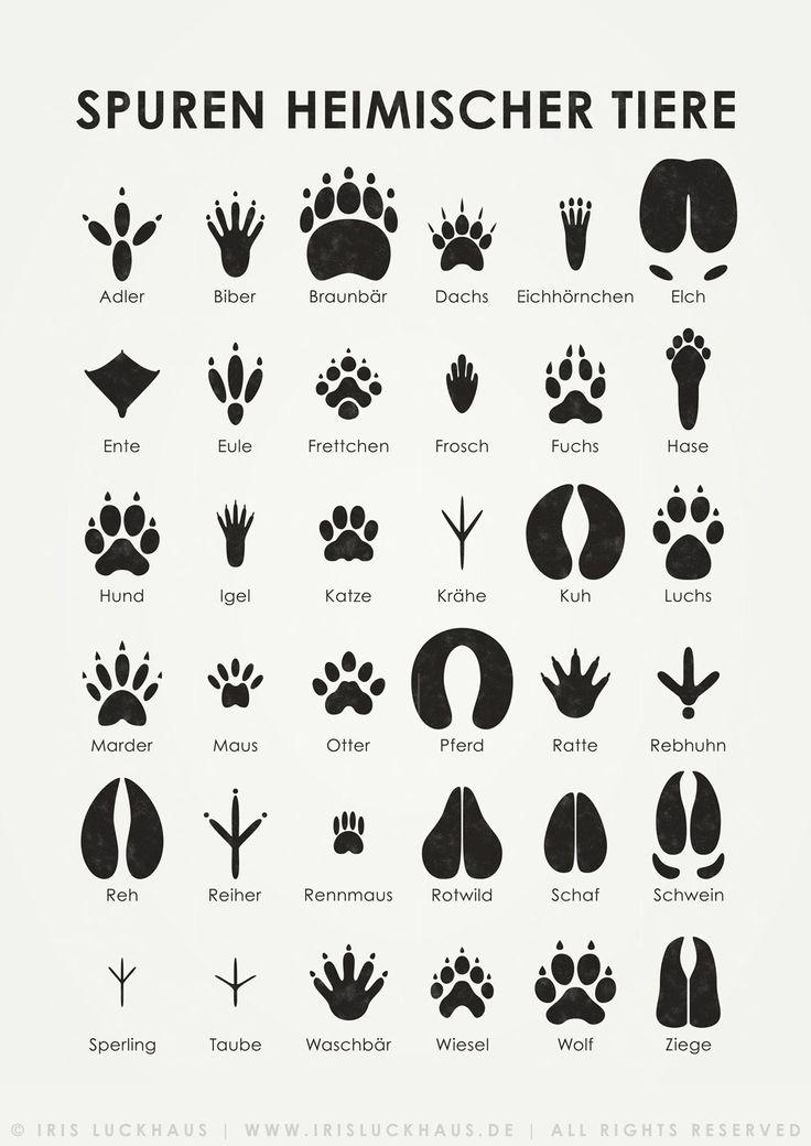 """Bogen """"Tierspuren"""" zum Bestimmen und Erkennen der Spuren heimischer Tiere; Poster, Kunstdruck und Postkarte, Illustration © Iris Luckhaus"""