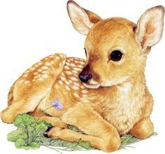 baby deer laying down - Google Search