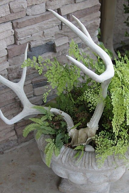 SBG kinda digs these antlers with maidenhair fern.  Maidenhair is a North American native species so you might actually find this in nature.