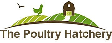 The Poultry Hatchery - has Barred Hollands and really nice practices - including a promise not to kill male chicks.