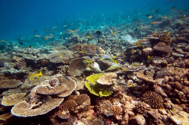 Coral islands Maldives