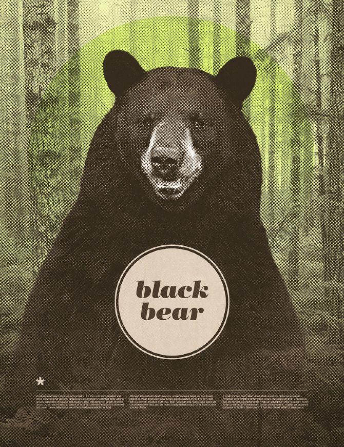Black Bear - Chase Kunz