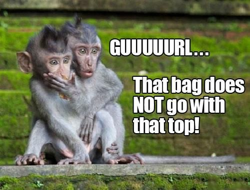 Guuuuurl...that bag does NOT go with that top! silly monkeys..lol: Shots Recipes, Baby Food, Funny Stories, Funny Pictures, National Geographic, Friday Funny, Funny Photo, Funny Animal, Bali Indonesia