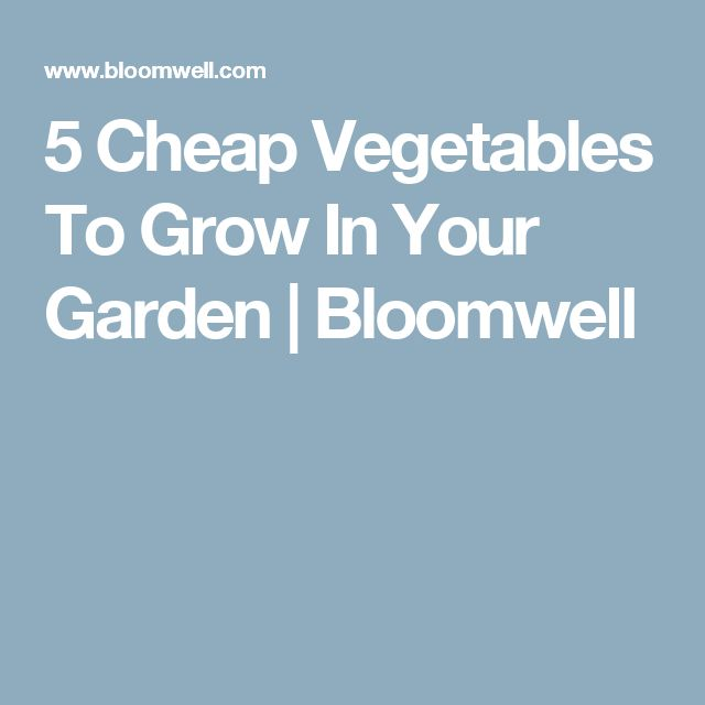 5 Cheap Vegetables To Grow In Your Garden | Bloomwell