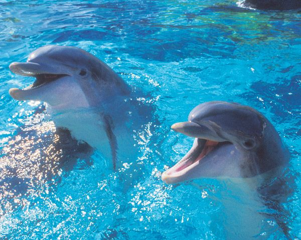 Dolphins: Bucket List, Sea Life, Animals, Dolphins, Creatures, Ocean, Things, Smile, Whales