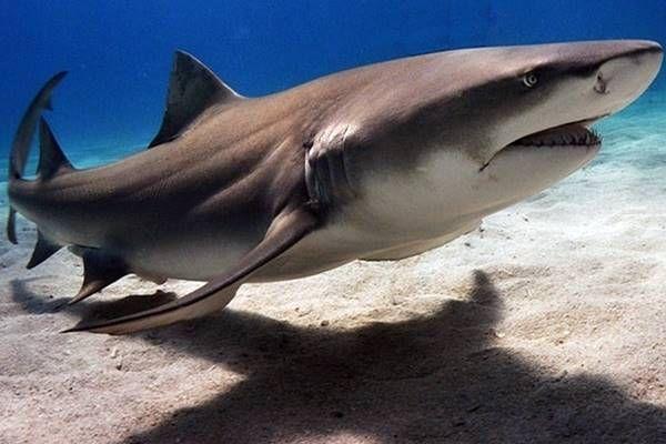 A internet está ameaçada por ataques de tubarões - http://www.blogpc.net.br/2016/05/a-internet-esta-ameacada-por-ataques-de-tubaroes.html #curiosidades #internet #tubarões