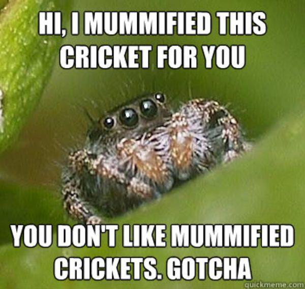 [Image - 325878] | Misunderstood Spider | Know Your Meme