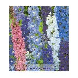 Stračka modré odstíny - Deplhinium cultorum - semena Stračky - 50 ks