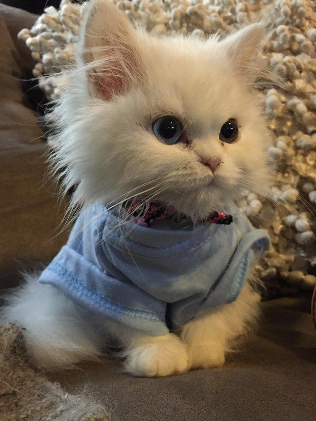 And this kitten who is demonstrating proper sweater weather technique. | 39 Overly Adorable Kittens To Brighten Your Day: