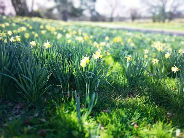 Beautiful daffodils out for our spring weddings www.prested.co.uk
