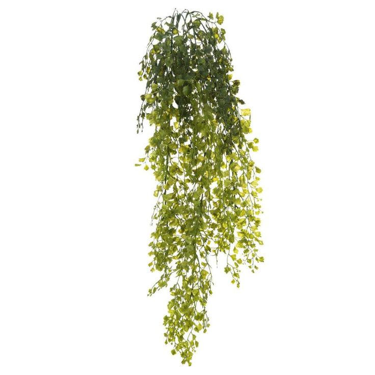 Plantas artificiales colgantes. Planta artificial colgante adiantum. Las hojas de la planta se asemejan a las de perejil. Decorativa aspecto natural. Alto 80 cm