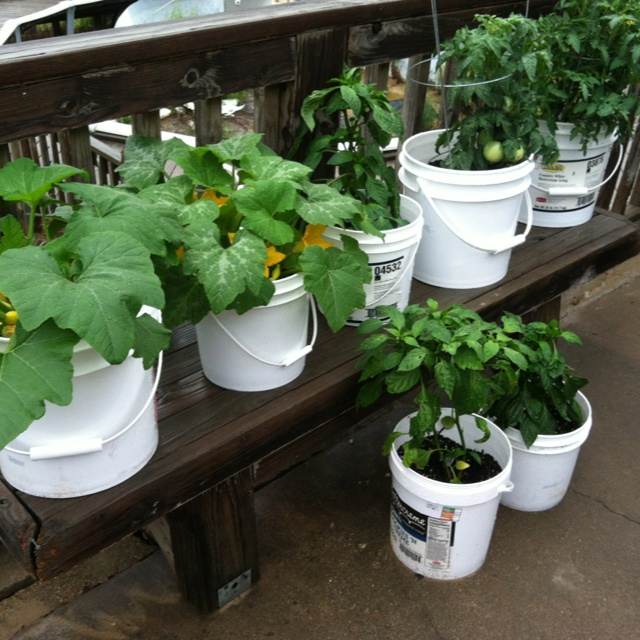 1000 images about my gardening this year on pinterest for Gardening 5 gallon bucket
