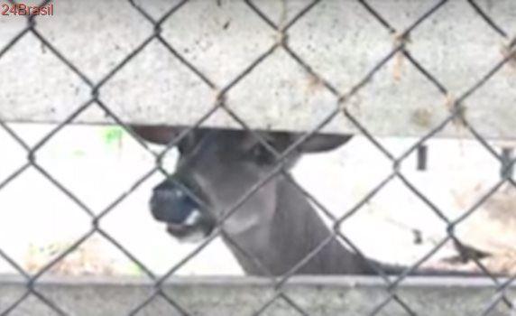 Autoridades investigam morte de 4 animais no último ano em zoológico de El Salvador