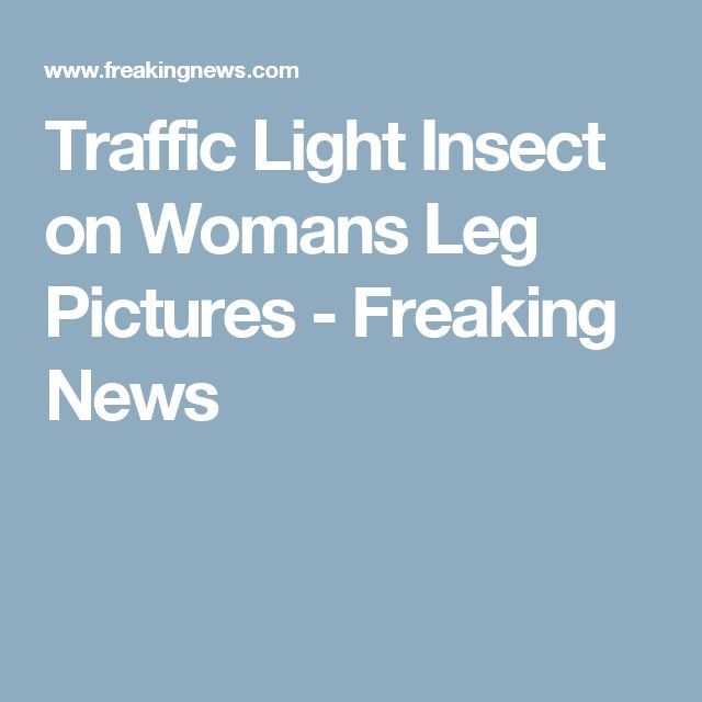 Traffic Light Insect on Womans Leg Pictures - Freaking News