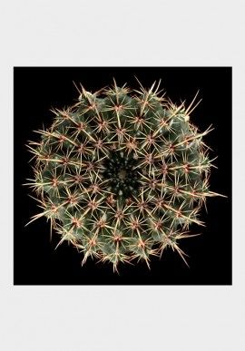 "Photo - ""Cactus"" by Fabio Zonta BUY IT NOW ON www.dezzy.it!"