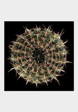 """Photo - """"Cactus"""" by Fabio Zonta BUY IT NOW ON www.dezzy.it!"""